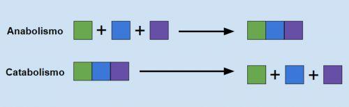 Imagen de Metabolismo celular