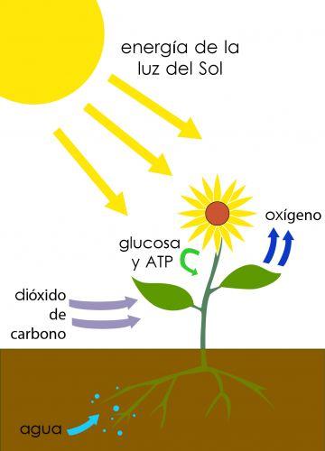 Imagen de Nutrición autrófoga